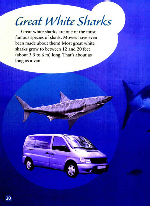 all about sharks seven paragraphs Sharks facts and information facts about species, anatomy, distribution, reproduction, conservation and relation with humans.