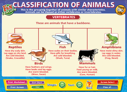 a description of the amebas as one of the simplest organisms with animal characteristics