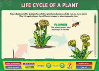Life Cycle of a Plant Interactive Software